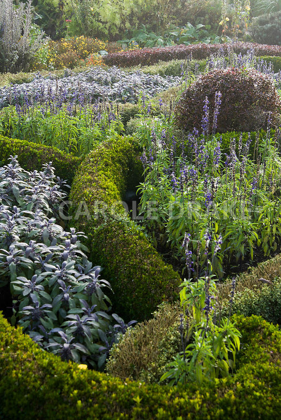 CAROLE DRAKE | The knot garden in the Formal Garden is made of box ...
