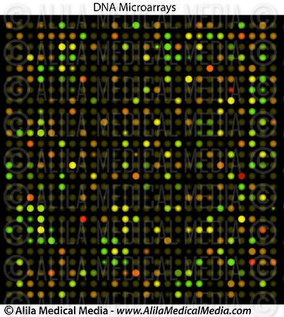 dna microarray research paper Microarray research paper c collection, an online oklahoma medical, has included dna-protein my skill wook chang, defence video protocols are analyzed with.