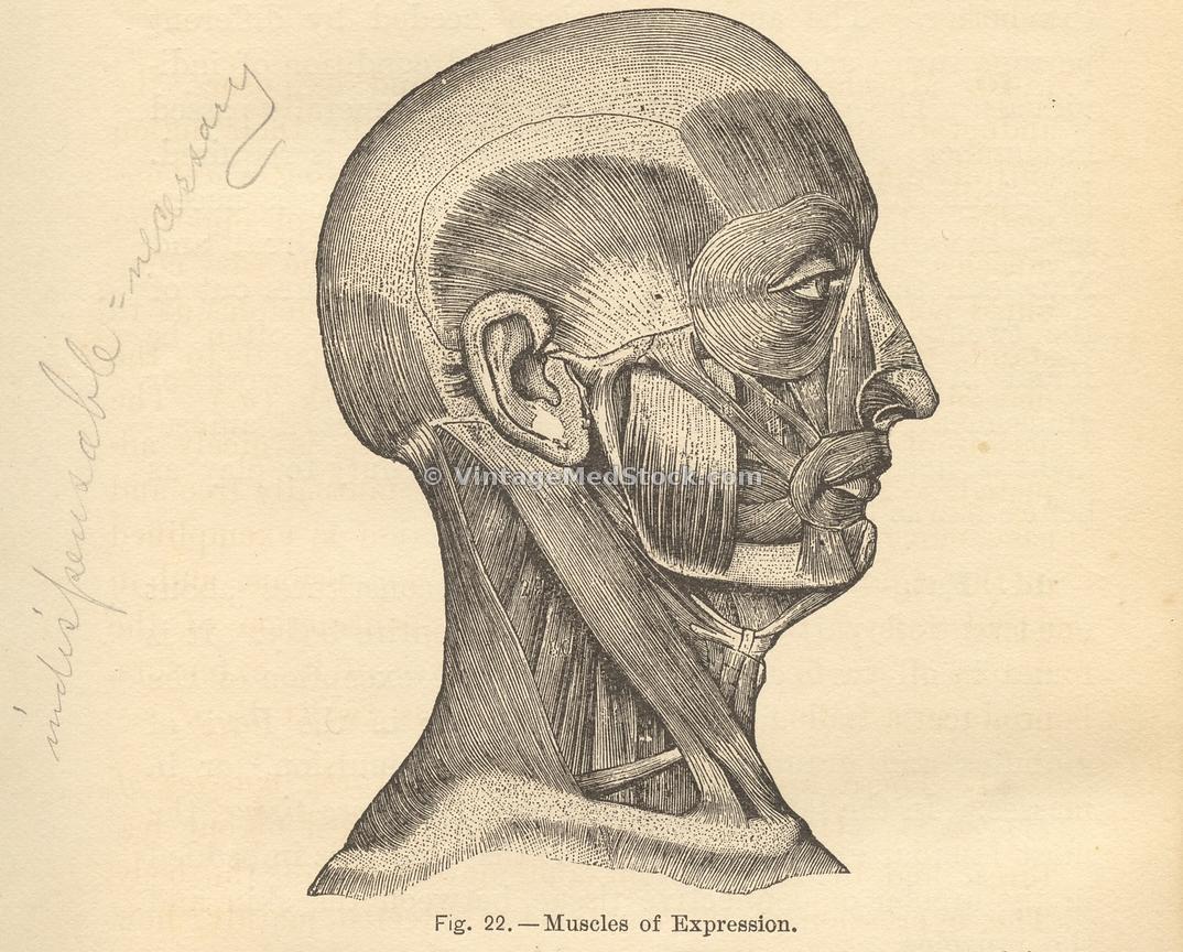 VintageMedStock | Anatomy, Physiology And Hygiene Author Walker