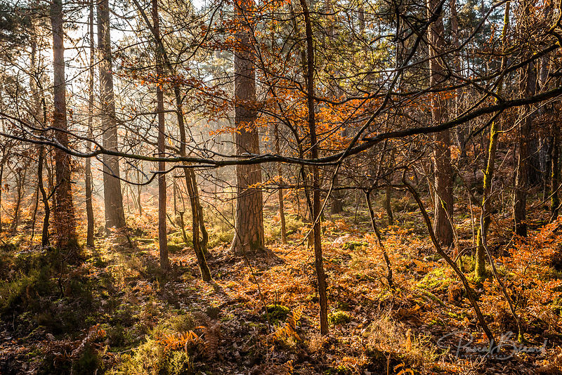 PBE-2014-03-09-2014-03-09_-_Forêt_de_Fontainebleau-8432