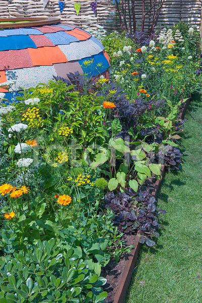 photo de bordure de plantes annuelles et vivaces avec all e engazonn e fotoflor grand choix. Black Bedroom Furniture Sets. Home Design Ideas