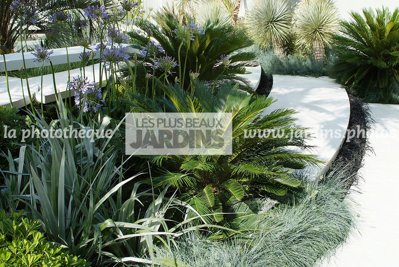 la phototh que les plus beaux jardins cycas revoluta sagou du japon sago palm designer. Black Bedroom Furniture Sets. Home Design Ideas