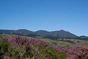 Mt Tam Heather
