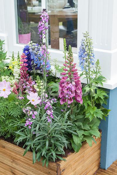 photo de jardini re fleurie sur terrasse jardini re estivale fotoflor grand choix de. Black Bedroom Furniture Sets. Home Design Ideas