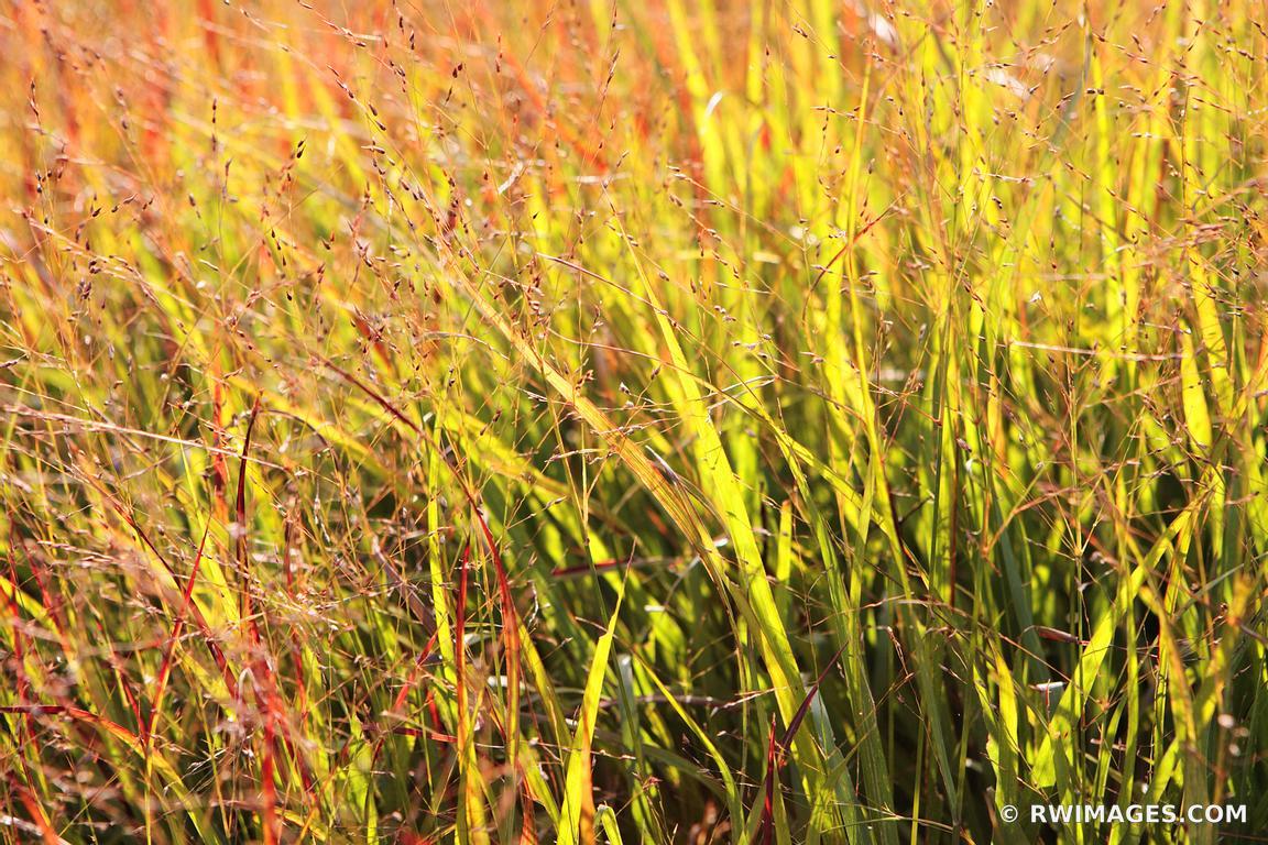 Photo Print of PRAIRIE GRASS AUTUMN LURIE GARDEN MILLENIUM PARK ...