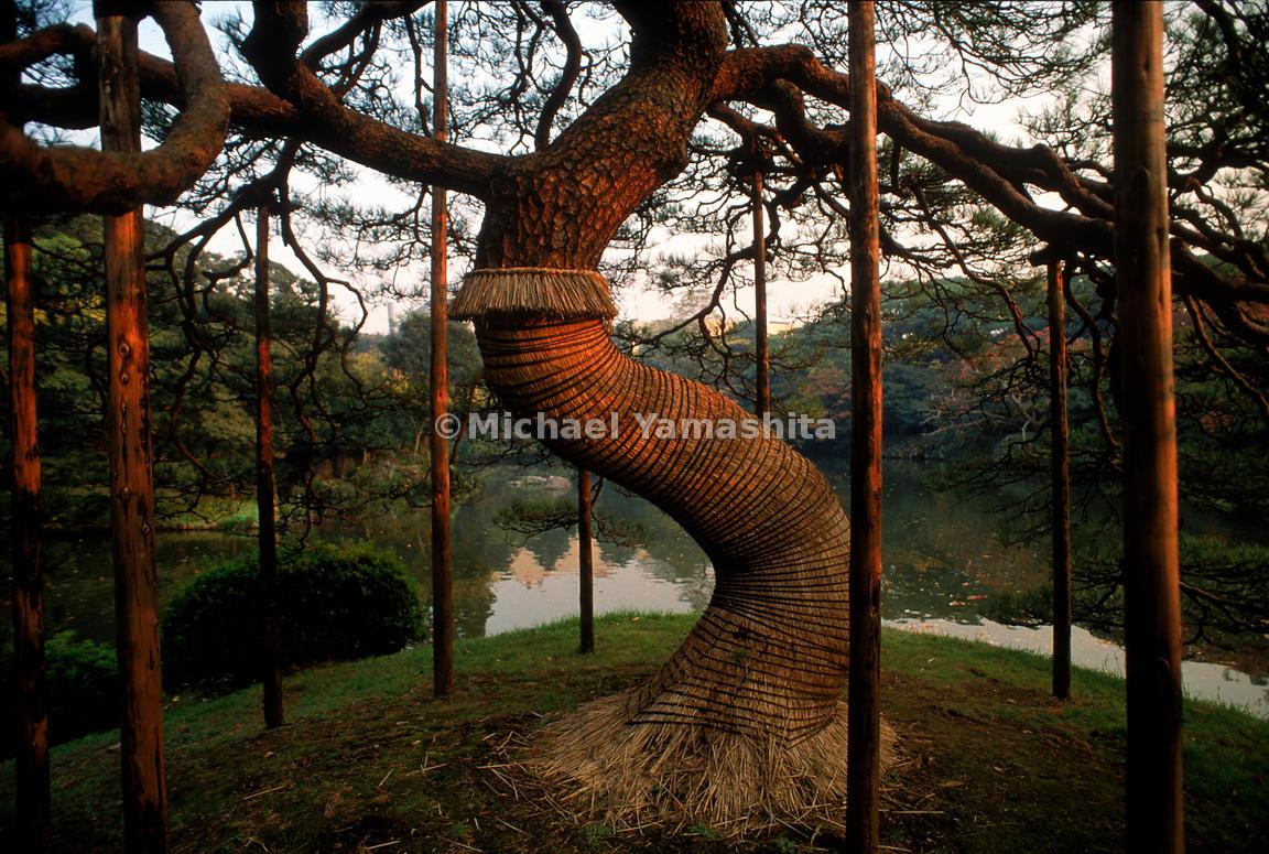 MichaelYamashita   Japanese Garden- Pine boughs, pruned for ...
