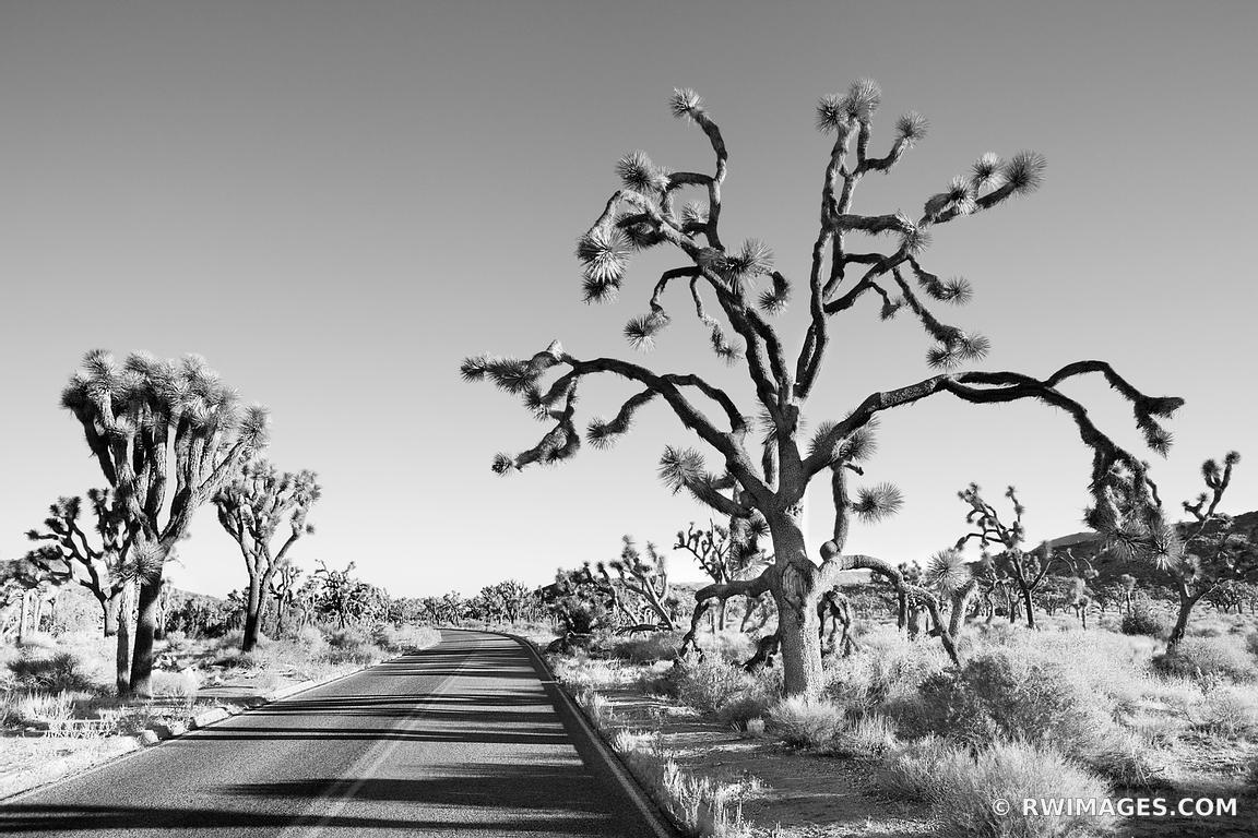 Framed Photo Print Of Road Through Joshua Tree National Park