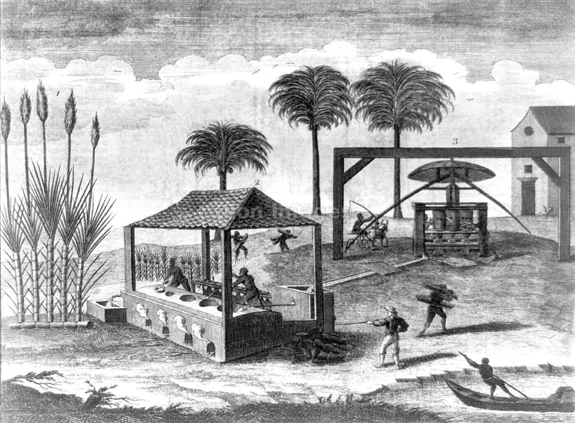 reproduction on an 18th century sugar Type of computer printer the quality of this reproduction is dependent upon the  quality of the  the eighteenth century, sugar cane was introduced to mauritius .