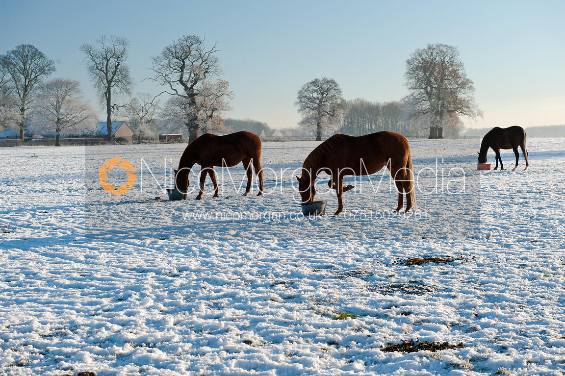 Image Horses Feed In Wintery Conditions At Burley House
