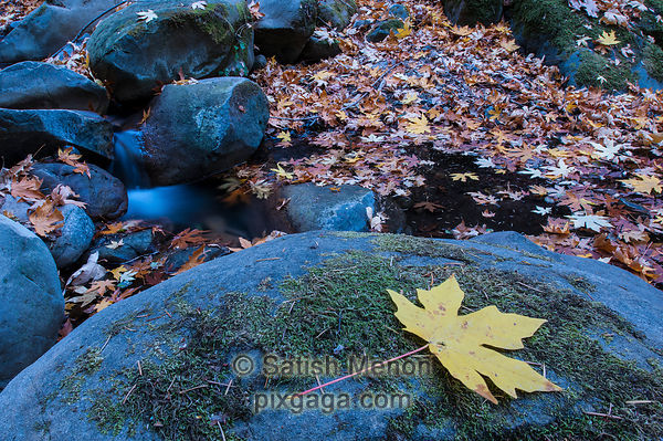 Fall leaves and small waterfall, Uvas Canyon, Morgan Hill, CA, USA