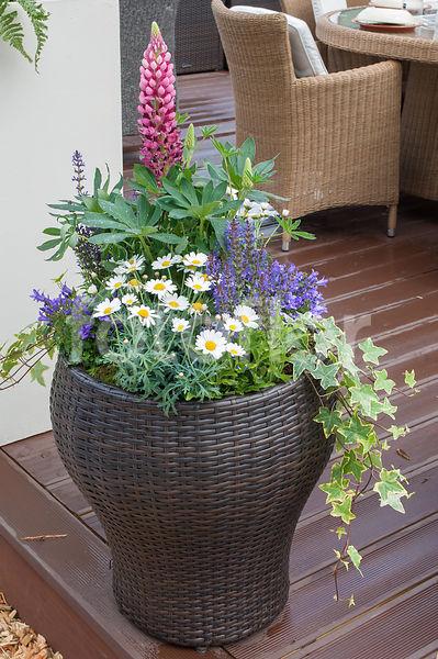 Photo de Jardinière fleurie sur terrasse en bois, salon de jardin ...