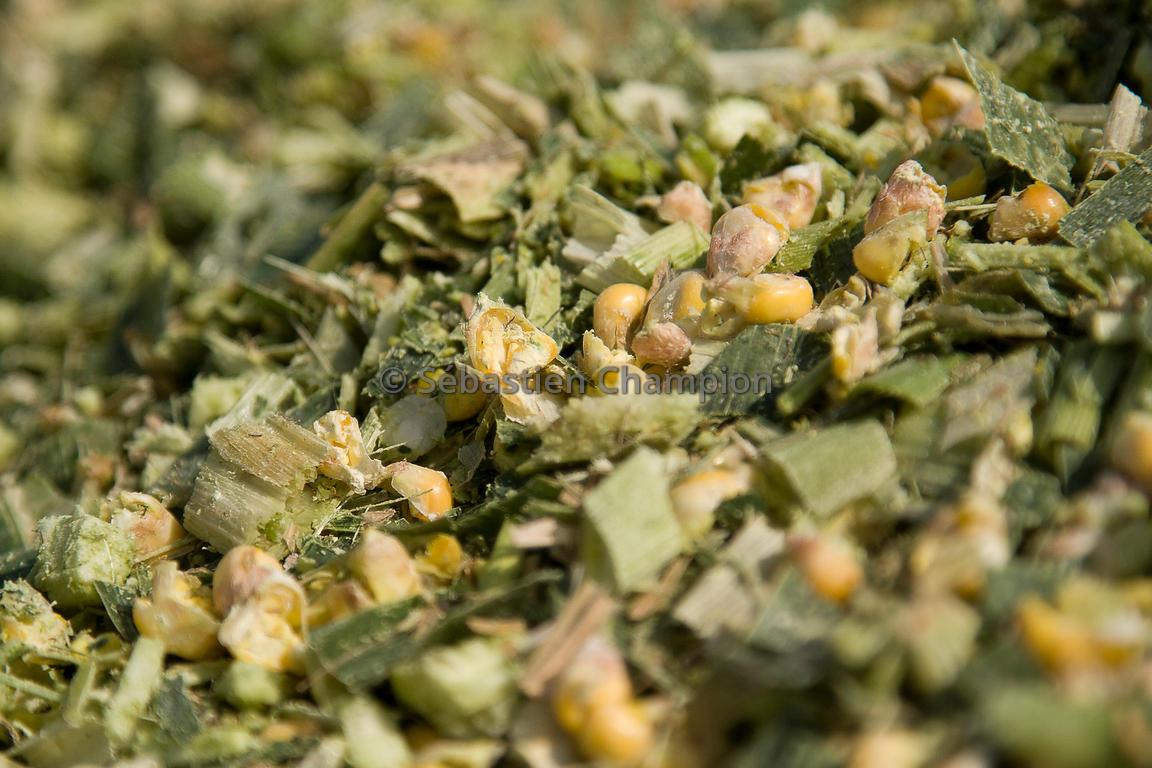 photographie ENSILAGE DE MAIS FOURRAGE agricole ea5bce6084