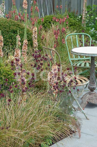 Photo de Scène de terrasse, massif de graminées et vivaces ...