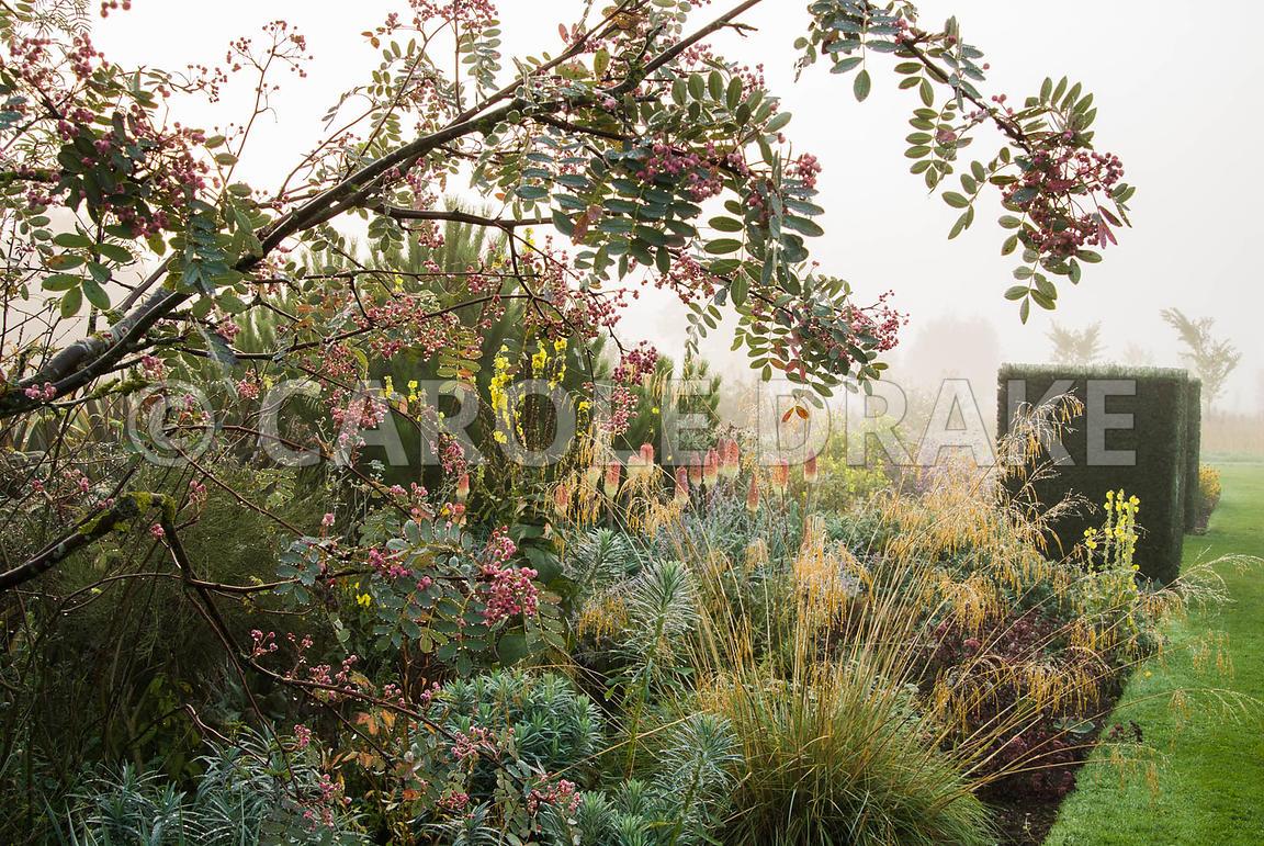 CAROLE DRAKE   Border includes Stipa gigantea, euphorbia, kniphofias ...