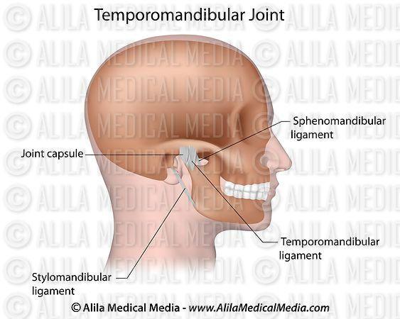 Alila Medical Media | Ligaments de l'articulation temporo ...