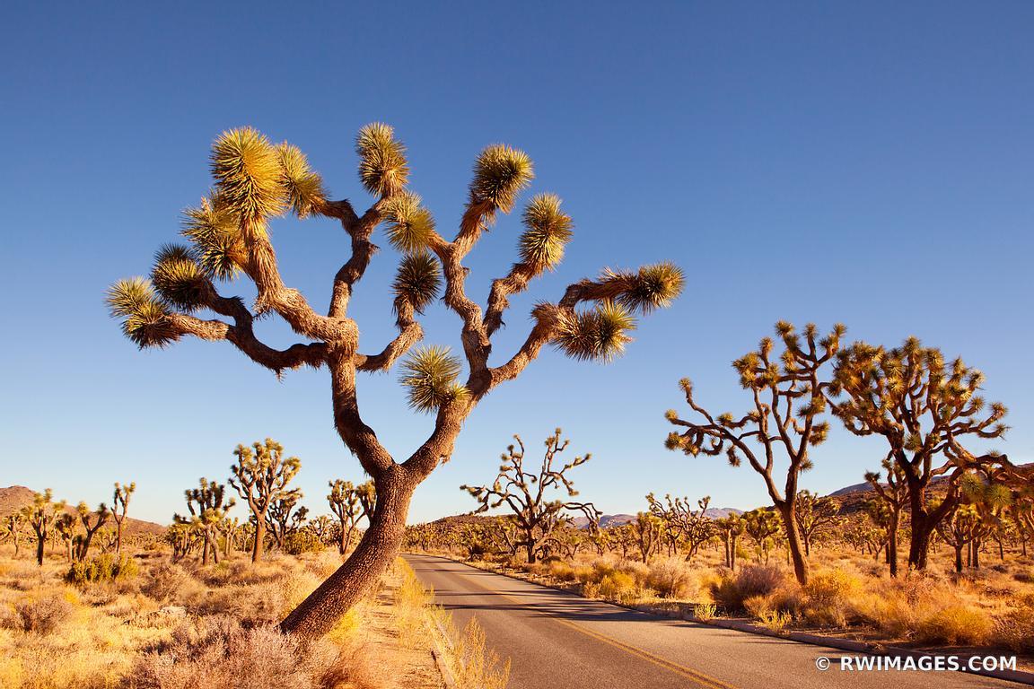 Fine Art Photography Prints           Joshua Tree National